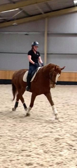 4 Year Old WB Gelding For Sale