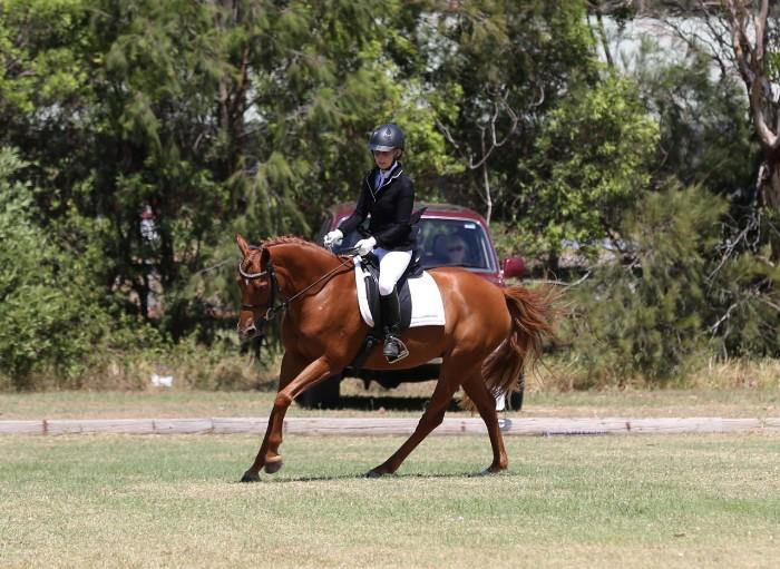 Warmblood Performance Pony