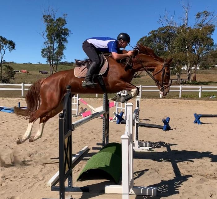 Eye catching 6yo Mare! Dressage, Event or Jump!