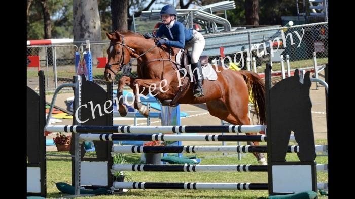 Competitive 1.25m  Showjumper