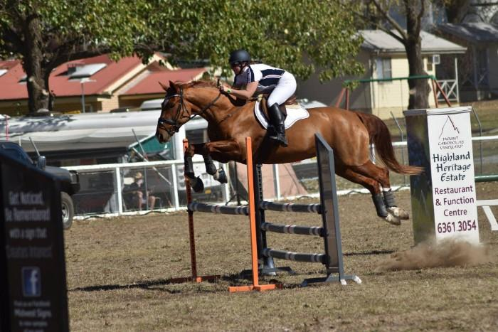 Show Jumper / Ultimate all rounder