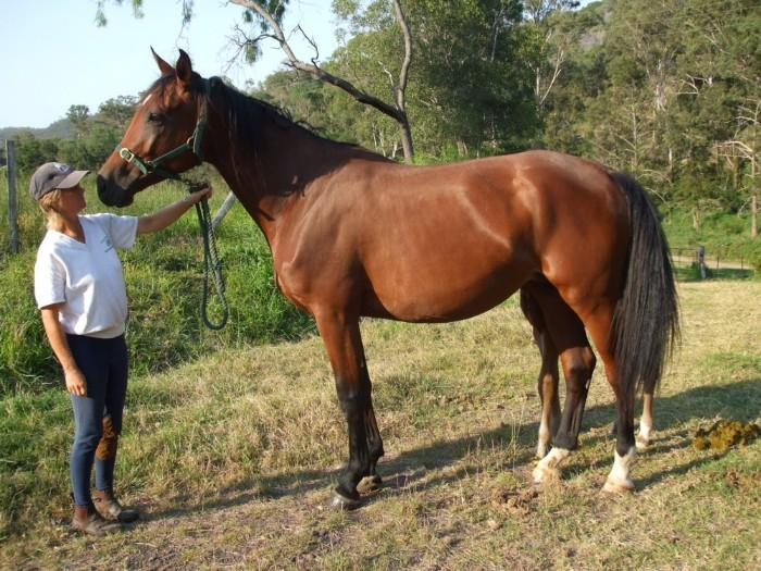 Aachimedes Broodmare