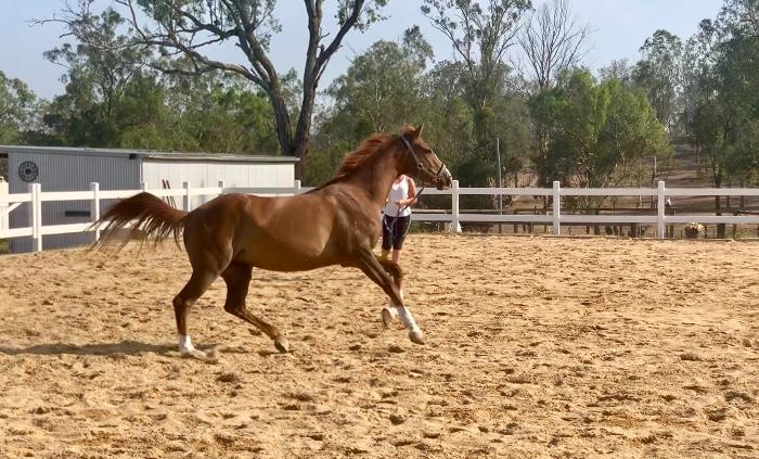 Flashy 3yo Mare