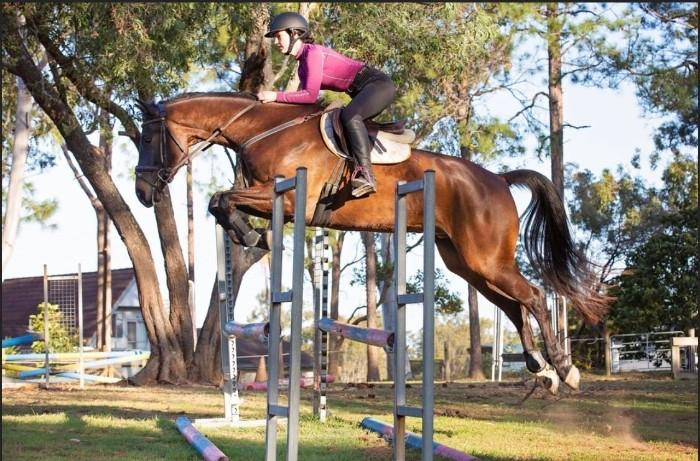 EXTREMELY TALENTED WARMBLOOD GELDING