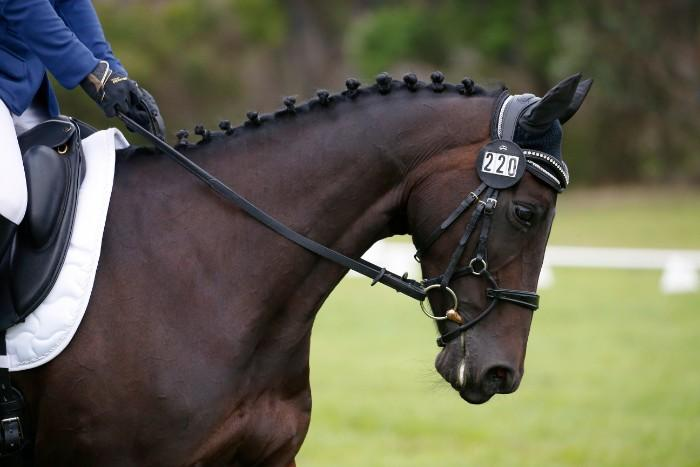 Beautiful, talented, compact & safe warmblood