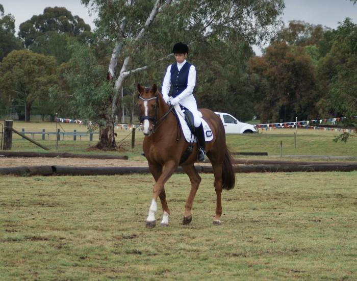 Stunning Dressage Schoolmaster / Showhunter