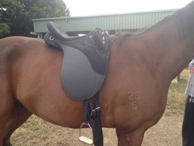 Stock Saddle on horse