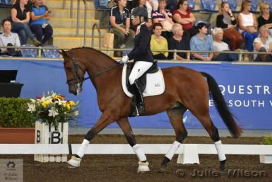 Nureyev ridden by Daniella Dierks - Winner of the 4yo Young Dressage Horse at the 2016 Sydney CDI