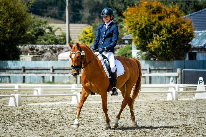 Talented Dressage Pony