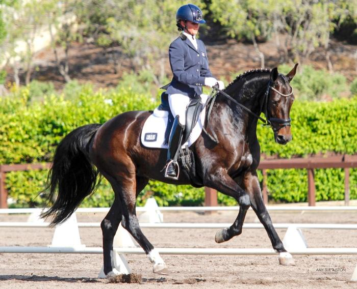 Sandrella-International quality Dressage Mare