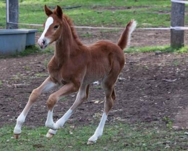 Colt by Calgary GNZ