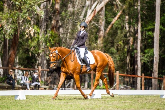 Competitive TB Gelding