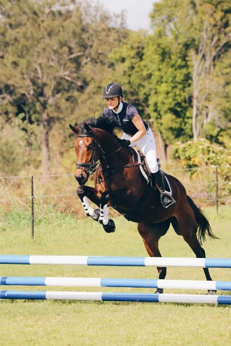 Eventing/Showjumping Prospect