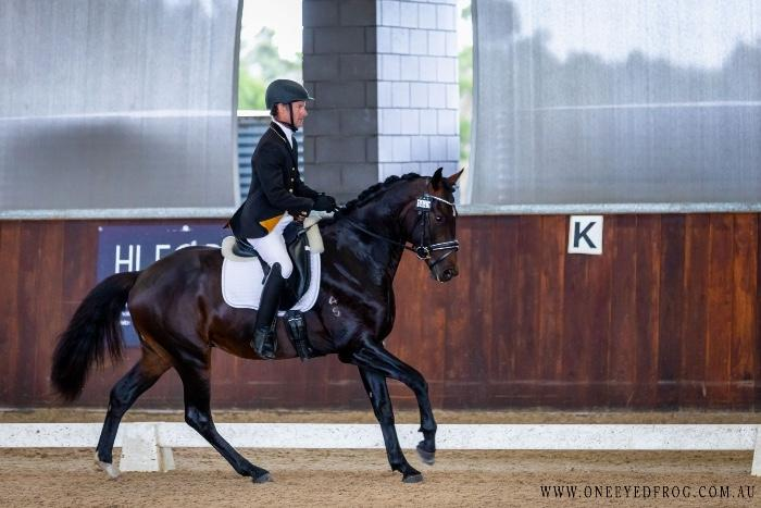 15.3hh 4yo Gelding with International Pedigree