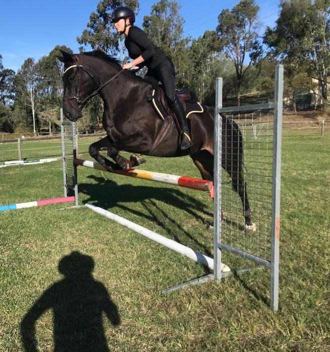 Talented and brave show jumper