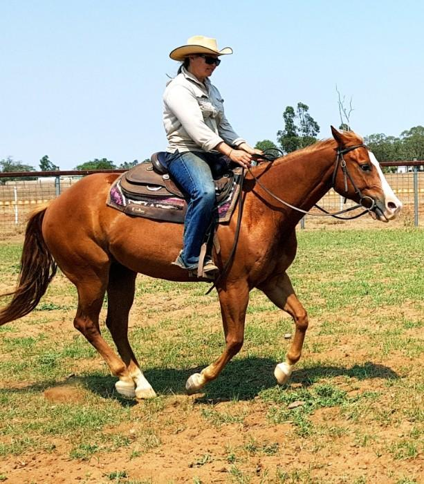 Quiet chestnut gelding