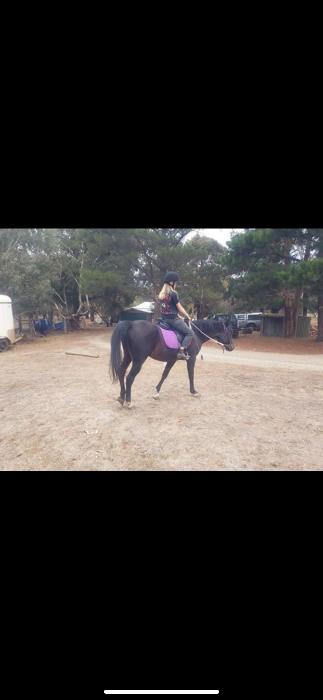 Knowledgeable beginner horse