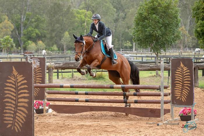 COMPETITIVE MARE - WINNING DRESSAGE  & EVENTING