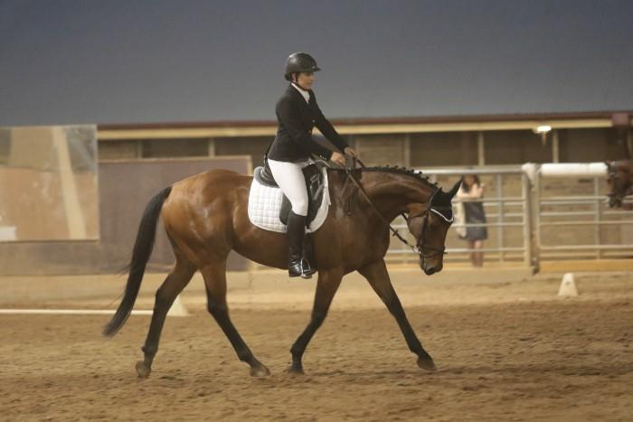 Beautiful Dressage horse / Eventer