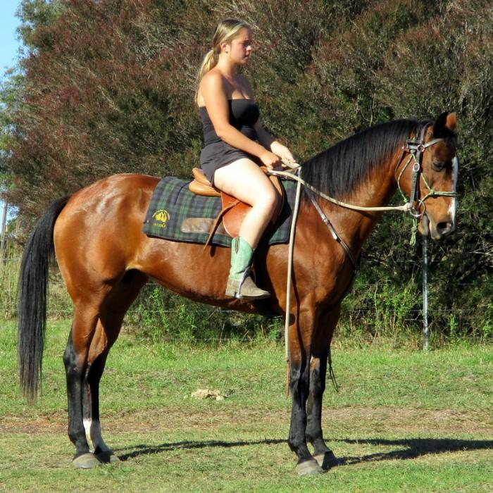 Quiet Bay Stock Mare +VIDEO+