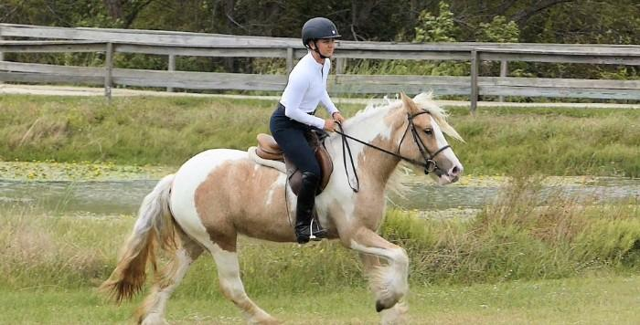 14hh, 3Years Old,Palomino/White,Gypsy Vanner, mare