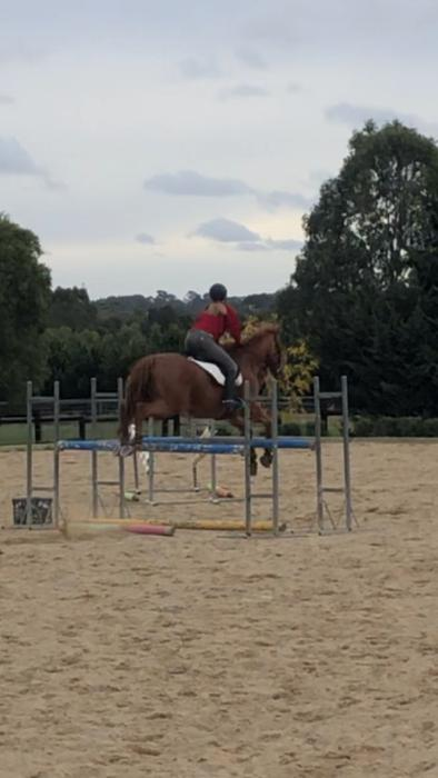 Perfect  showjumper