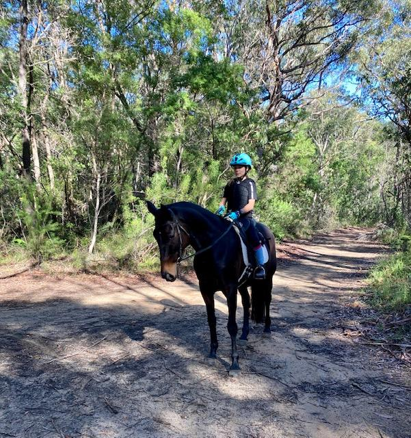 beautiful, sweet natured ASH Mare 15hh