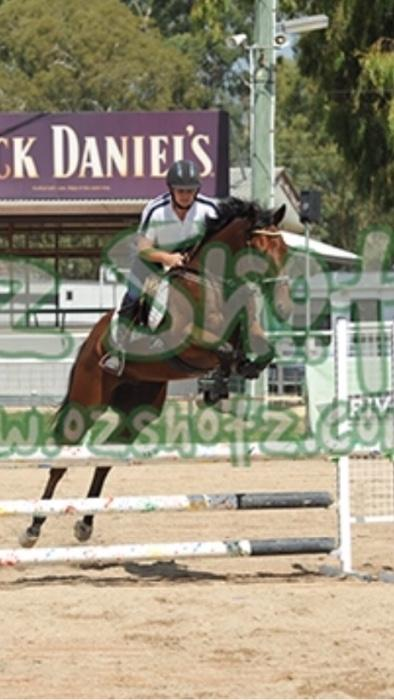 6yr old Thoroughbred Gelding
