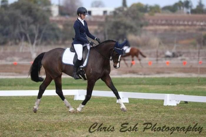 IHB Dance For Me; Event, Sj, Dressage or Show!