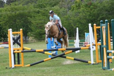85cm showjumping round